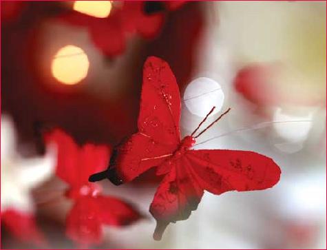 butterflywedding_4[1]